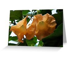 lacy peach flowers Greeting Card