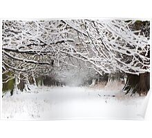 Underneath the Winters Trees Poster