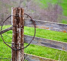 barbed wire by thvisions