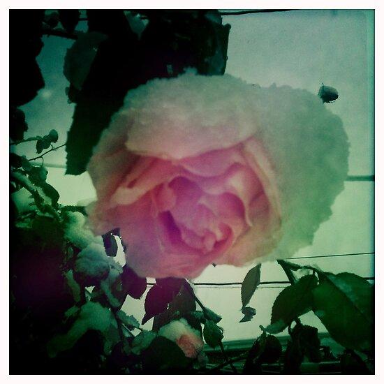 Skull Rose by Deirdre Hughes