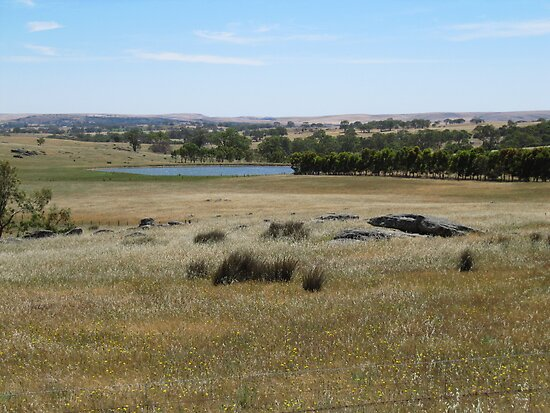 View across to the East Range, Springton, Sth. Australia. by Rita Blom
