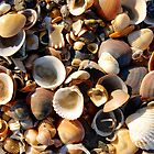 Shells by Harald Walker