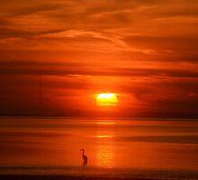 Swan Song by hamptonsgateway
