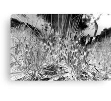 Horsetail #36 Canvas Print
