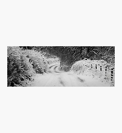 Woodland Bend Photographic Print