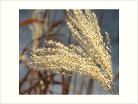 Winter Softness by lorilee