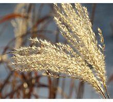 Winter Softness Photographic Print