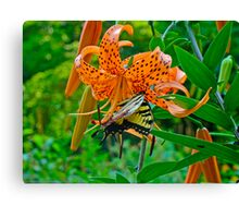 Tiger Swallowtail Butterfly and Turk's Cap Lily Wildflower Canvas Print