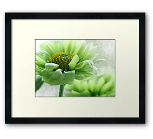 ~ Peppermint Daisy ~ Framed Print