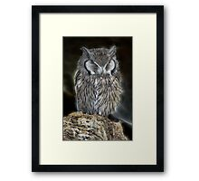 Sleeping Owl Beauty Framed Print