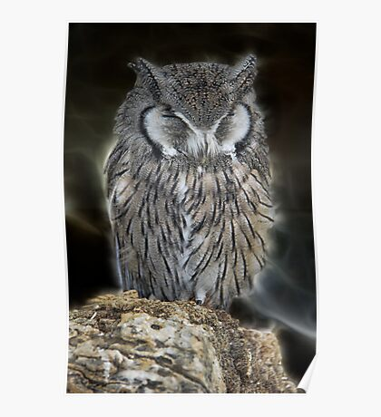 Sleeping Owl Beauty Poster