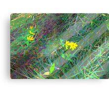 Little yellow daisy-like wildflowers Canvas Print