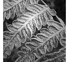 Winters touch Photographic Print