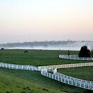 Kentucky Horse Park  by John Carey