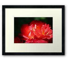 Enchanting Colours Framed Print