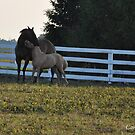 mother and foal by John Carey
