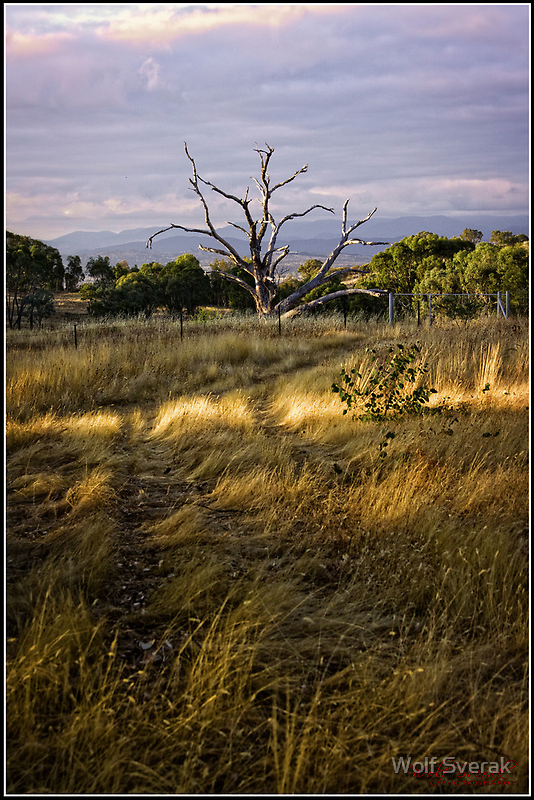 An early morning at the Pinnacle/Canberra/ACT by Wolf Sverak
