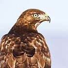 Red-tailed Hawk: 360 Degrees by John Williams
