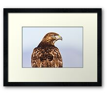 Red-tailed Hawk: 360 Degrees Framed Print