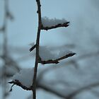 Snowy Branches by Willmoxdog