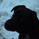 Puppy Dog Eyes by Willmoxdog