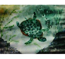 Sea Turtle, watercolor Photographic Print
