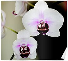 Orchids inside the office Poster