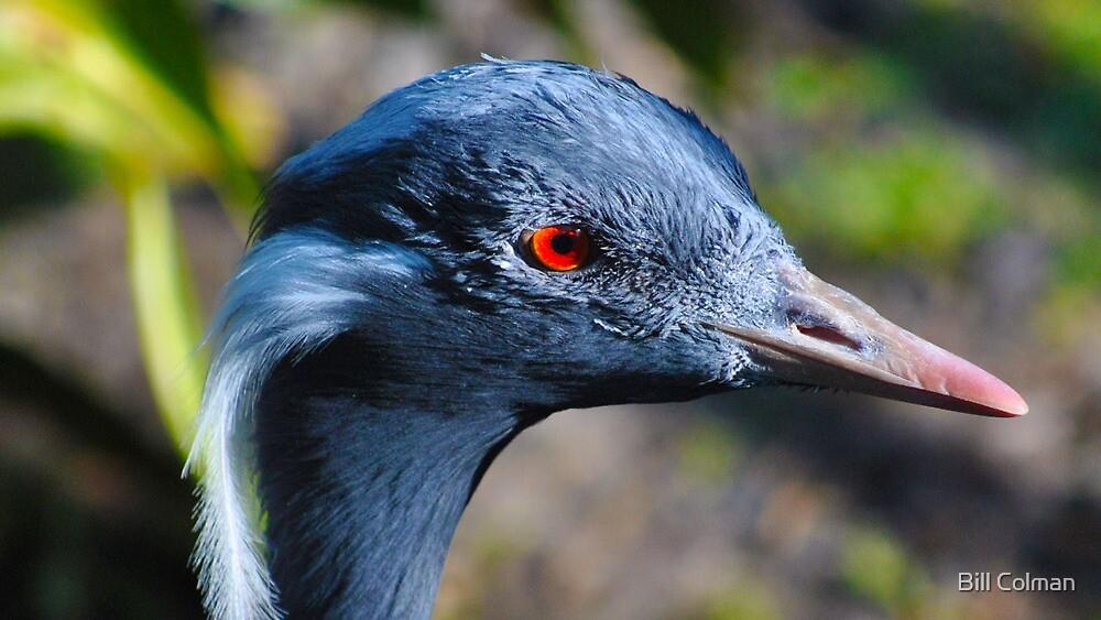 A Bird's Eye View by Bill Colman