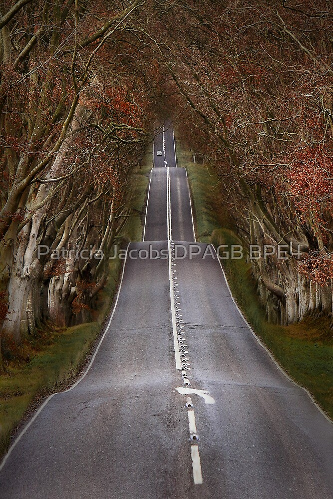 The Long Road by Patricia Jacobs CPAGB LRPS BPE4