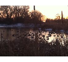 A Gander at Geese Photographic Print