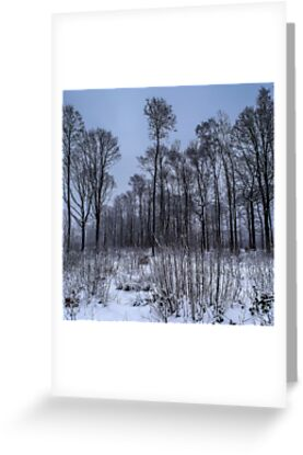 The Montmorency forest in winter by Rémi Bridot