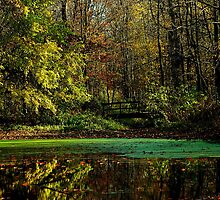 A peaceful fall day in the woods by jammingene