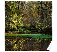 A peaceful fall day in the woods Poster