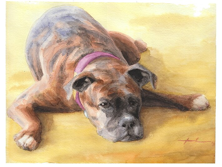 Boxer dog watercolor by Mike Theuer