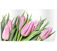 Tulips.... my first this year! Poster