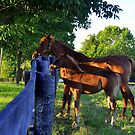 Two at the Fence - Woodford County by John Carey