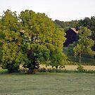 Dry Summer Barn II by John Carey