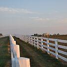 Double Fence II by John Carey