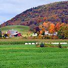 Autumn Upstate I by John Carey