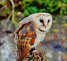 Barn Owl by Chris Thaxter
