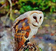 Barn Owl by Chris Thaxter