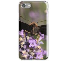 butterfly sucking nectar iPhone Case/Skin