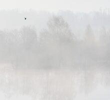 A Moment of Stillness by Remo Savisaar