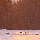 Roe deers by Remo Savisaar