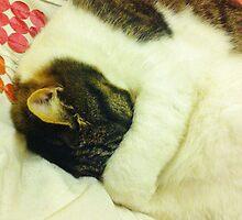 Grumpy Sleepy Cat by LivKelsey