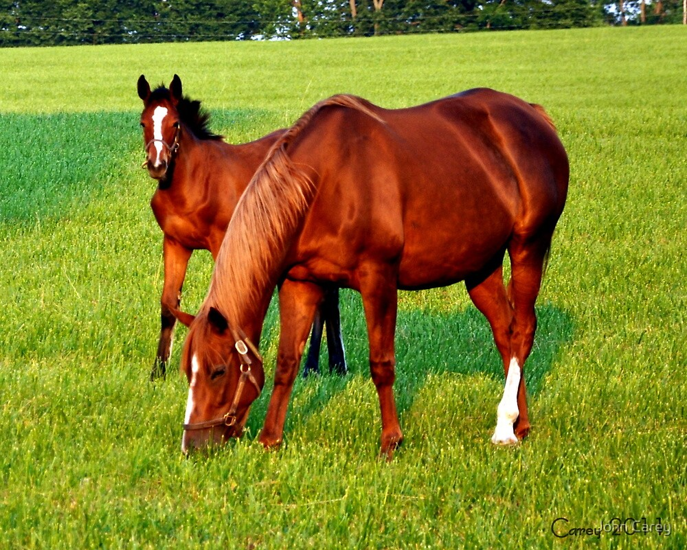 Mare and Foal Kentucky by John Carey