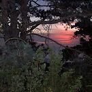 Through Torrey Pines by John Carey