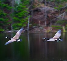 Take a Gander at them There Gooses by Nazareth