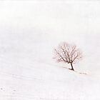 The Lone Tree {Textured} by Nicola  Pearson