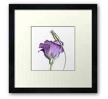 Purple Princess... Framed Print